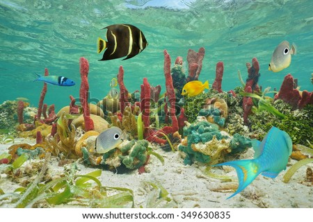 Colorful tropical fish and marine life underwater on a coral reef of the Caribbean sea - stock photo