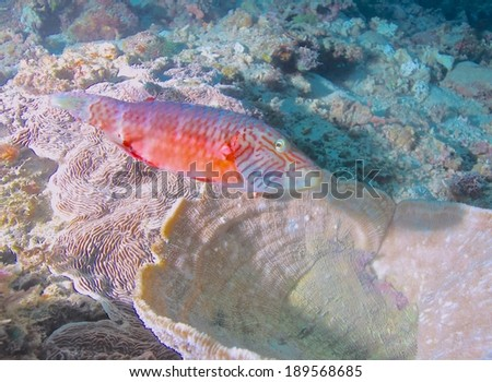Colorful tropical fishes with coral /marine life.