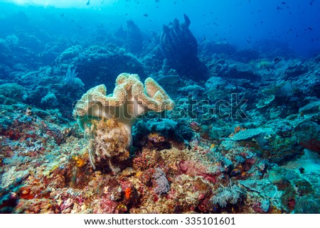 Colorful Tropical Reef Landscape with Soft Corals, bali, Indonesia