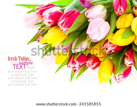 Colorful tulip blooms isolated on white - stock photo
