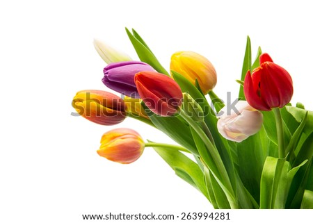 colorful tulip flowers bouquet on white background