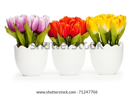Colorful tulip flowers in the white pot - stock photo