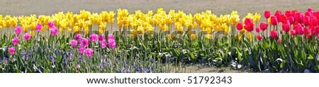 Colorful tulip garden - stock photo