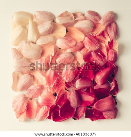 Colorful tulip petals pattern in shape of a square. Flat lay. - stock photo