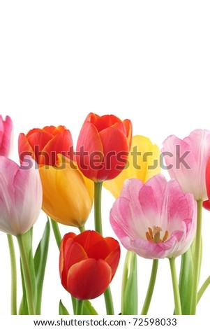 Colorful tulips background - stock photo