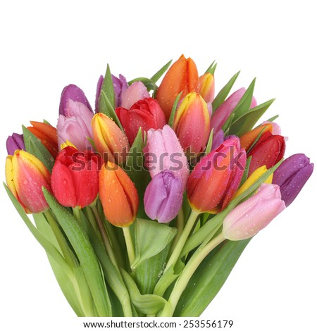Colorful tulips flowers bouquet in spring or mother's day isolated on a white background - stock photo