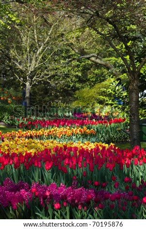 Colorful tulips, hyacinths and crown imperials in park in spring - stock photo