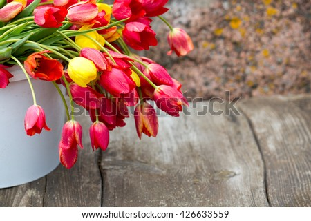 colorful tulips in a bucket - stock photo