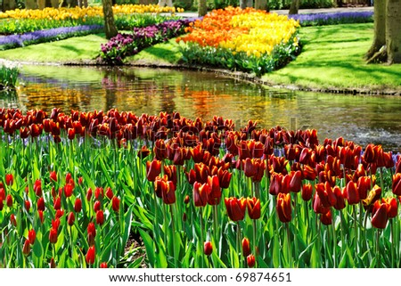 Colorful Tulips in Keukenhof Gardens. - stock photo