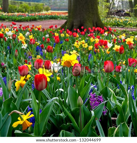 Colorful tulips in the park. Spring landscape. - stock photo