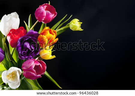 Colorful tulips isolated on black - stock photo