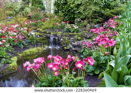 Colorful Tulips near decorative creeck with  waterfall in Keukenhof Garden
