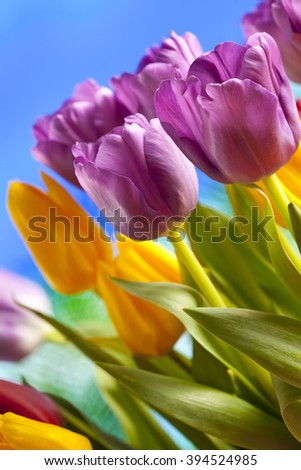 Colorful tulips on blue background - stock photo