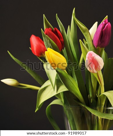 Colorful tulips on the black - stock photo