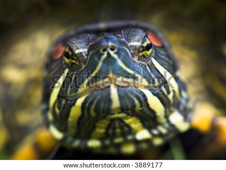Colorful Turtle Closeup Macro - stock photo
