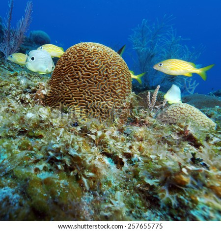 Colorful Underwater Coral Landscape of Caribbean Sea