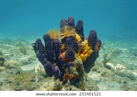 Colorful underwater creatures with sea sponges and feather duster worms, Caribbean sea - stock photo