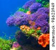 Colorful underwater flora - stock photo
