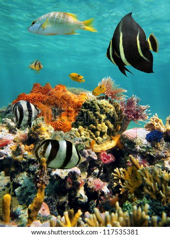 Colorful underwater marine life in a coral reef with water surface in background, Caribbean sea, Mexico - stock photo