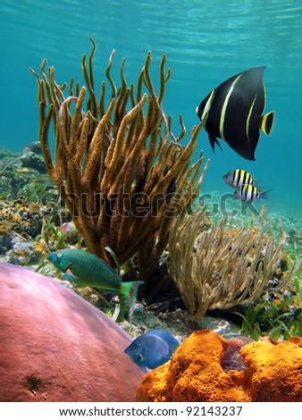 Colorful underwater scene in the Caribbean sea with tropical fish, corals and sponge, Cozumel, Mexico - stock photo
