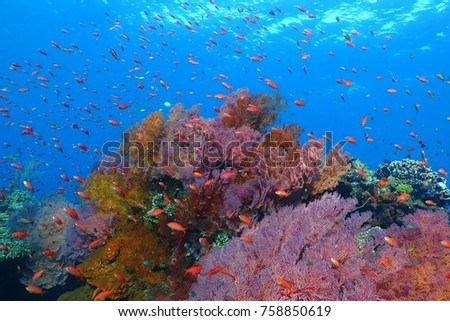 Colorful underwater tropical coral reef with fish, soft corals and blue sea. Scuba diving on the reef in the exotic ocean. Sea reef wildlife.