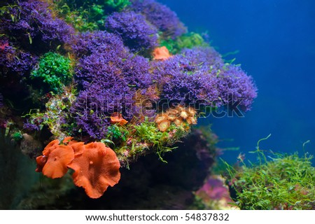 Colorful underwater world - stock photo