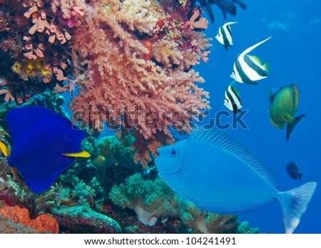 Colorful underwater world with fish and corals