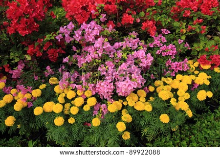 Colorful variety of flowers. - stock photo