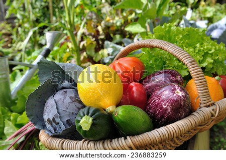 colorful vegetables in basket placed in a vegetable garden  - stock photo
