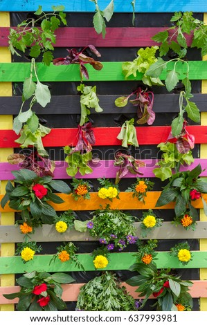 Colorful Vertical Pallet Garden Stock Photo (100% Legal Protection ...