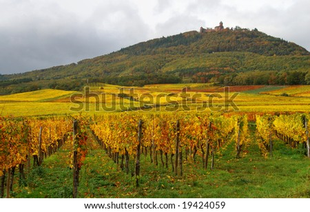 Colorful Vineyards and a castle - stock photo