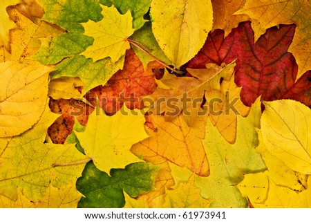 Colorful vivid background of fallen autumn leaves - stock photo