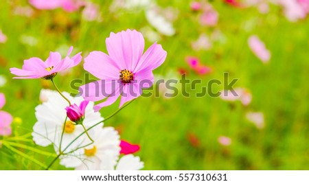 Colorful Vivid Flowers In Garden