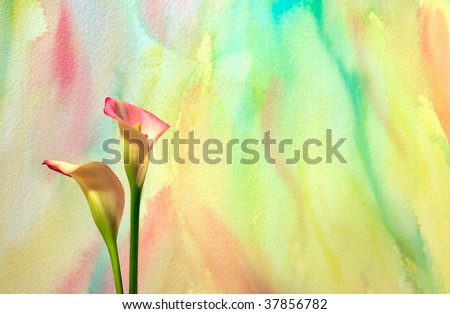 Colorful watercolor background with Calla Lilies - stock photo