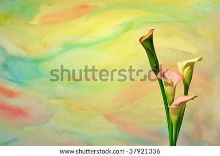 Colorful watercolor background with Calla Lilies set to the right. - stock photo
