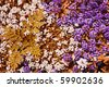 Colorful white and purple rock cress ground cover plants in a garden - stock photo