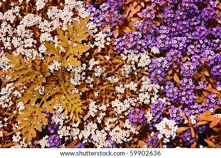 Las cubiertas del suelo proporcionan el substituto popular del césped, si las superficies sólidas o las plantas como Stepables | OregonLive.com