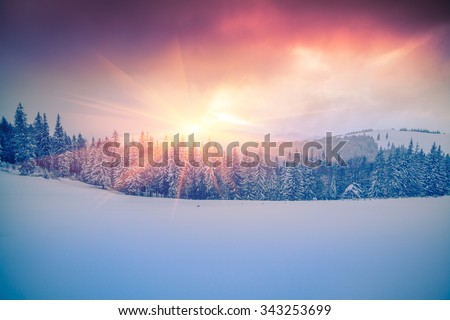 Colorful winter scene in the Carpathian mountains.  - stock photo