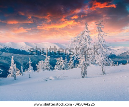 Colorful winter scene in the snowy mountains. Fresh snow at frosty morning glowing first sunlight. Instagram toning.
