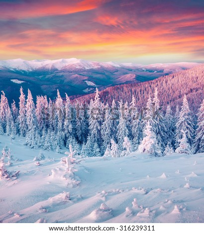 Colorful winter sunrise in the Carpathian mountains. Gorgany ridge, Ukraine, Europe. Instagram toning. - stock photo