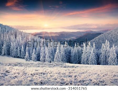 Colorful winter sunrise in the Carpathian mountains. Kostrycha ridge, Ukraine, Europe. - stock photo