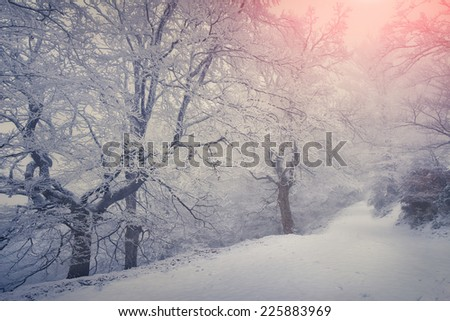 Colorful winter sunrise in the foggy forest. Retro style.