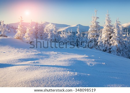 Colorful winter sunrise in the mountains. Fresh snow glowing first sunlight at the morning. - stock photo