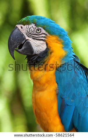 Colorful yellow-blue ara parrot - stock photo