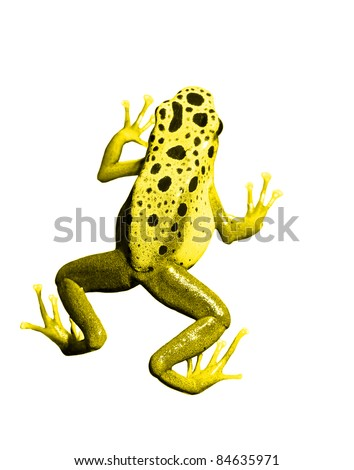 colorful yellow frog on white background. Isolated - stock photo