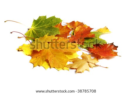 Colorfull autumn leaves isolated on the white background - stock photo