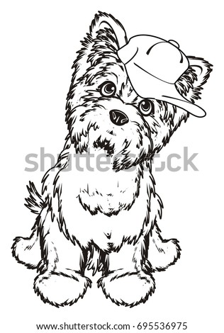 coloring Yorkshire terrier in cap sit