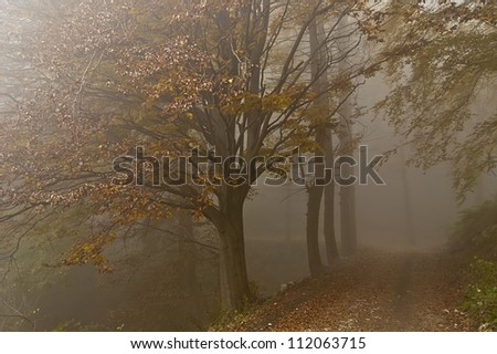 colors in the misty forest in autumn