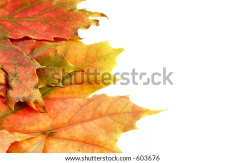 colors of autumn #7