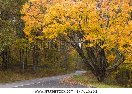 Colors of autumn along Skyline Drive, captured at Shenandoah National Park in Western Virginia - stock photo